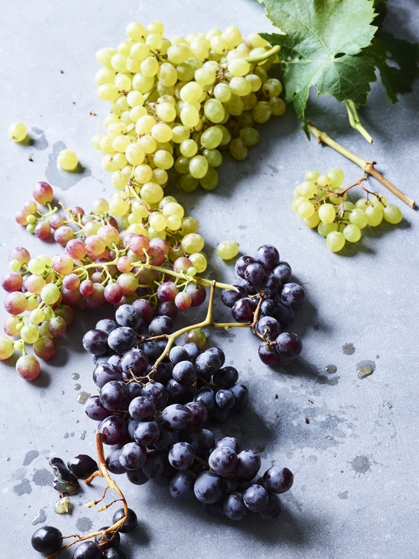 LEIGH_BEISCH_Sonoma_Grape_Variety_V2_22625